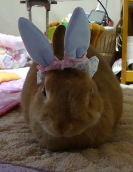 うさぎにウサギの耳